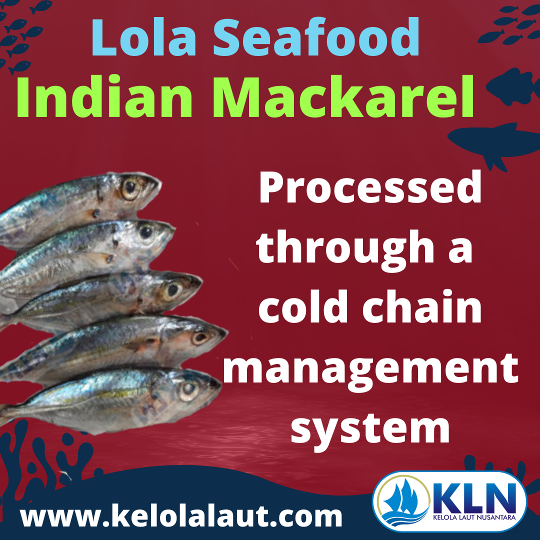 Indian Mackerel processed through a cold chain management system