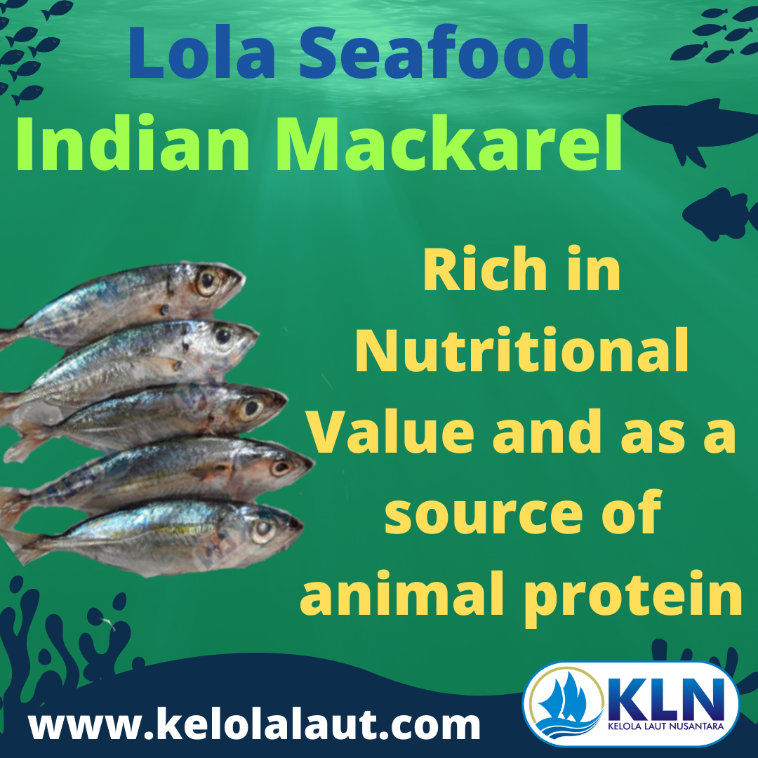 Indian Mackerel are rich in nutritional value and as a source of animal protein.