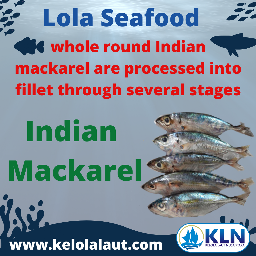 Indian Mackerel whole round is processed through several stages